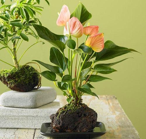 Тропическая флора - антуриум