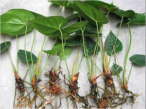 У каждой отделенной розетки должны быть корни