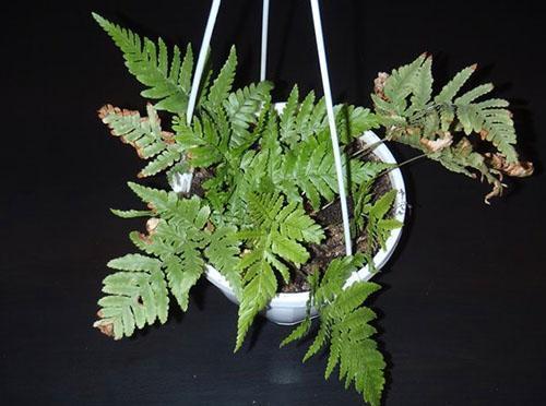 У растения проблемы