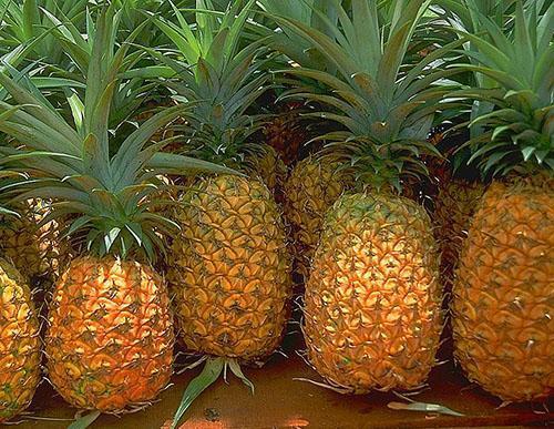Выбираем свежий ананас