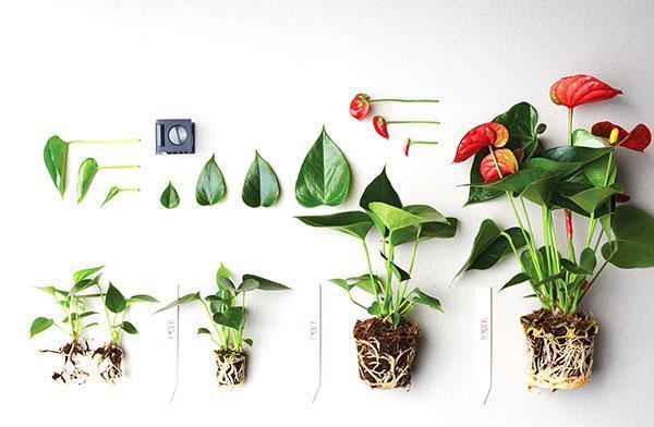 Этапы развития растения