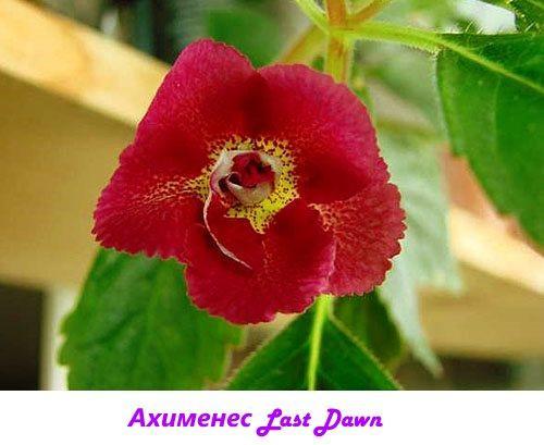 Ахименес Last Dawn