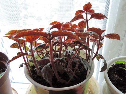 Растение набирает силу