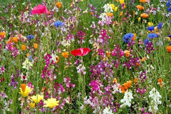Цветущие растения составляют 15% от общего состава семян