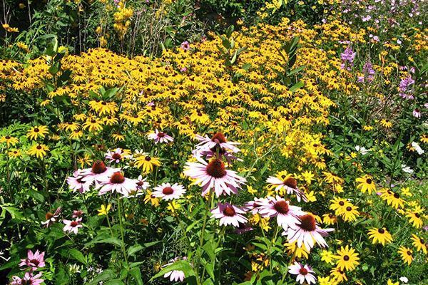 Для мавританского газона используют однолетние и многолетние цветущие растения