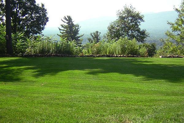 Красота газона зависит от правильного подбора семян