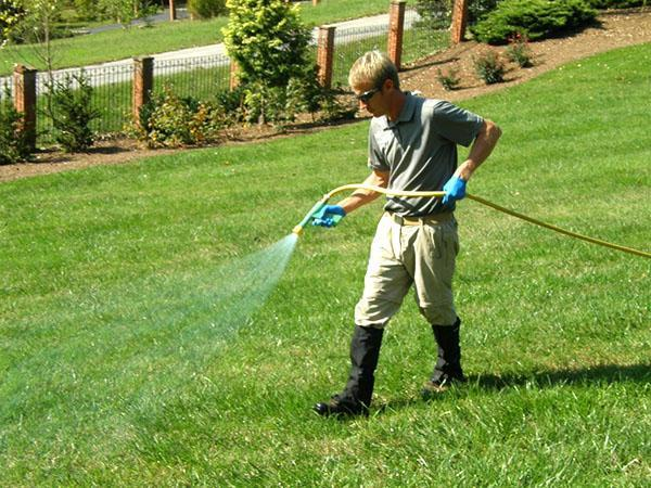 После внесения удобрений газон необходимо пролить