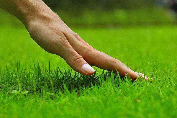 Ровное красивое покрытие обеспечат специально подобранные семена трав