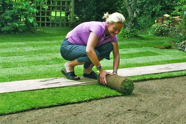 Рулонный газон нужно уложить сразу после доставки на участок