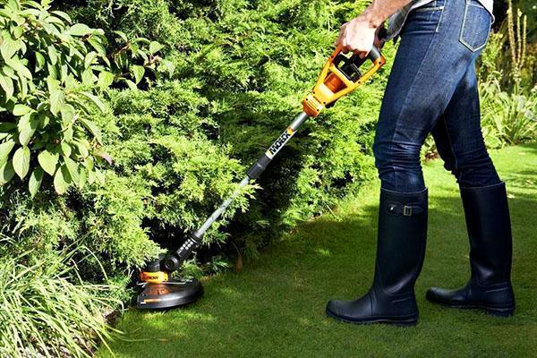 С мая по август газон необходимо периодически скашивать