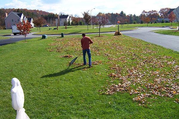 Уборка опавшей листвы с газона