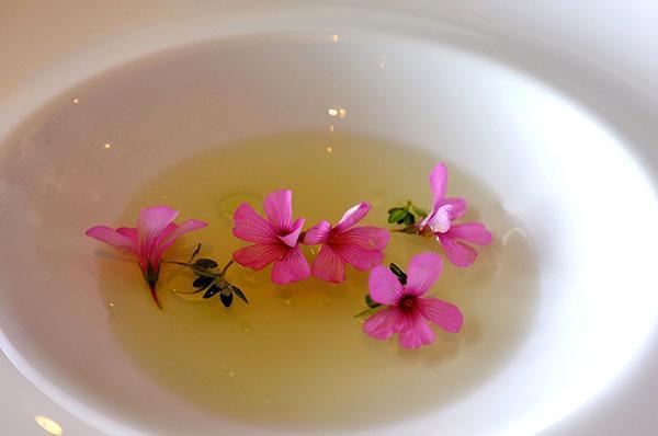 Герань - полезные и лечебные свойства растения и масла комнатной герани, противопоказания в применении, видео