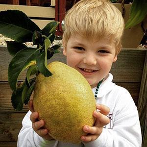 С помощью лимона можно повысить иммунитет ребенка
