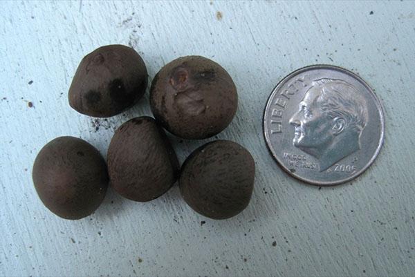 Семена для зимнего или весеннего посева