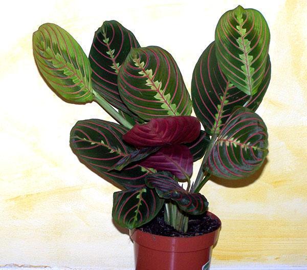 В зимнее время растению нужна дополнительная подсветка