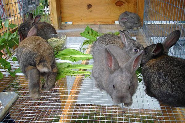Для разведения кроликов используют стационарные и переносные клетки