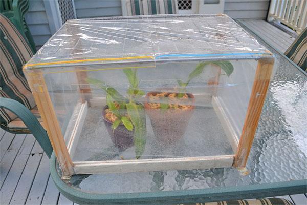 Для выхаживания больного растения нужно создать специальные условия