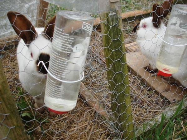 Разведение кроликов как бизнес - выгодно или нет, бизнес план, разведение в яме, миниферме и ферме, видеох
