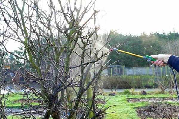 Опрыскивая деревья химическими препаратами необходимо строго придерживаться инструкции