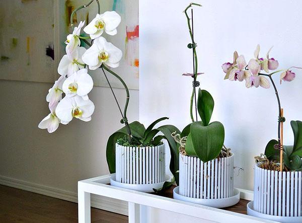 Какие горшки для орхидей нужны, как правильно выбрать емкость 9
