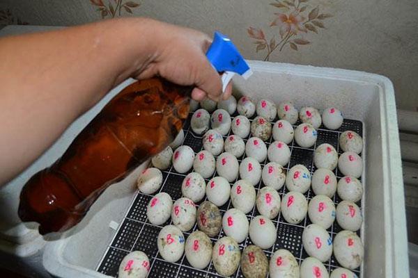 Периодически яйца смачивают
