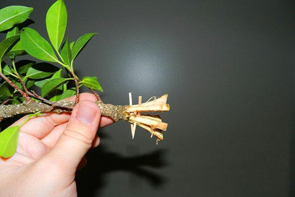 Цветы из гофрированной бумаги для топиария пошагово