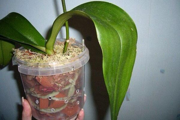 Растению нужен специальный субстрат