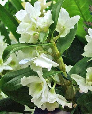Растению нужно создавать условия повышенной влажности