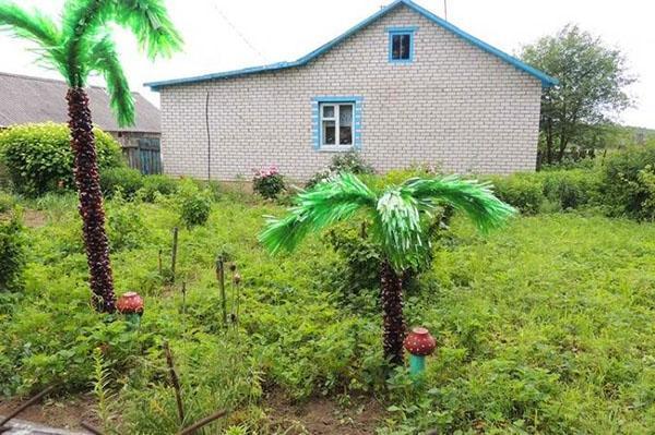 Растут на участке и маленькие, и большие пальмы