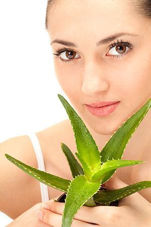 Сок алоэ используется как противовоспалительное средство при нагноениях, мокнущей сыпи, сухости кожи