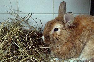 У кролика кокцидиоз