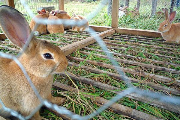 В клетках с кроликами должна быть чистота