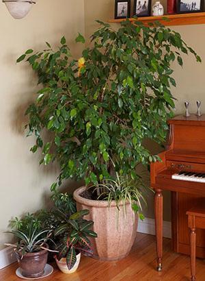 Великолепное растение