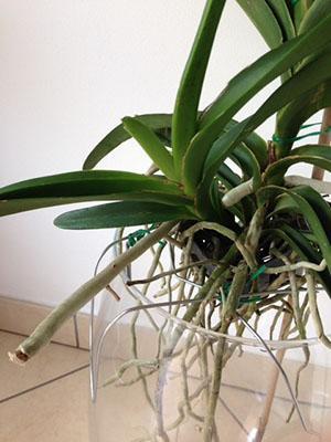 Это растение можно рассадить