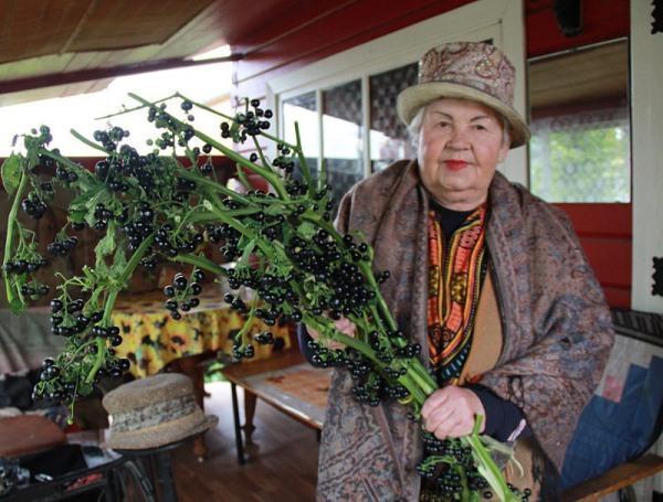 Ветки санберри