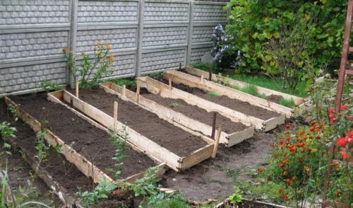 Как правильно делать грядки на огороде для моркови и лука 84