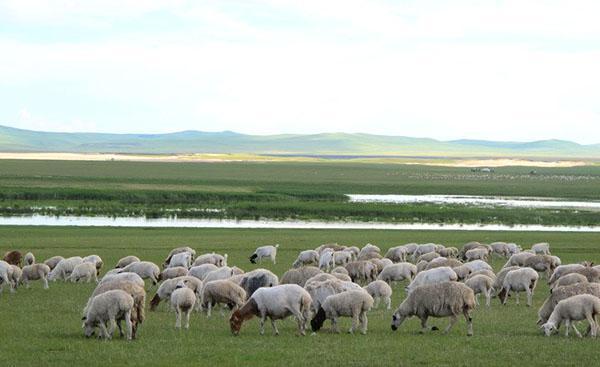 Бизнес план овцеводство скачать оцените идею бизнес проекта