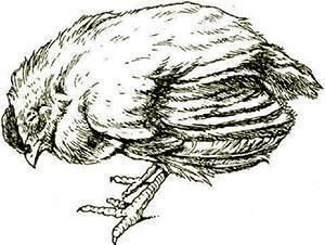 Гиповитаминоз и авитаминоз у цыпленка