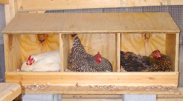 Гнезда для кур несушек из фанеры