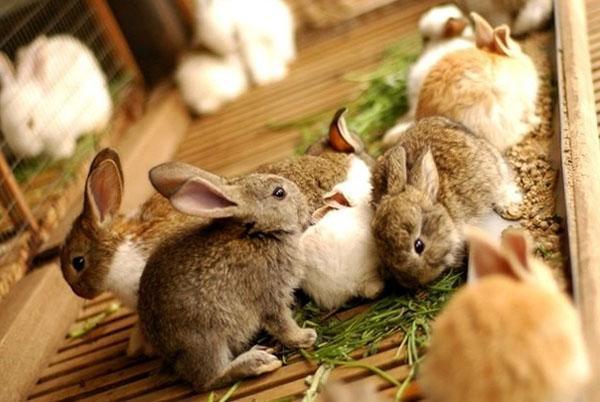 Крольчата едят траву