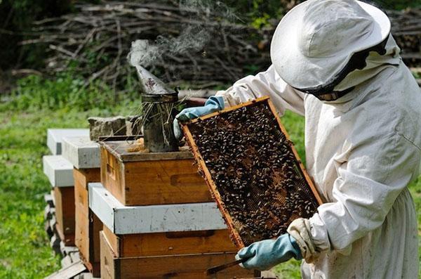 Работа пчеловода на пасеке