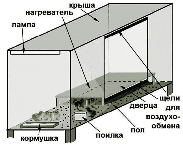 Схематическое изображение брудера