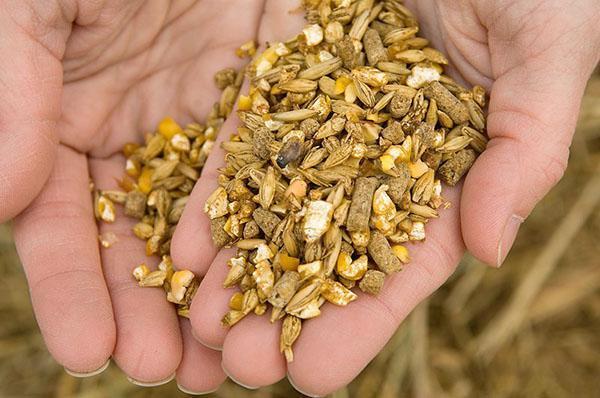 Состав питательного корма