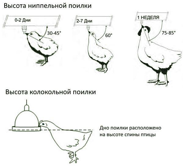 Высота установки ниппельной и колокольной поилки