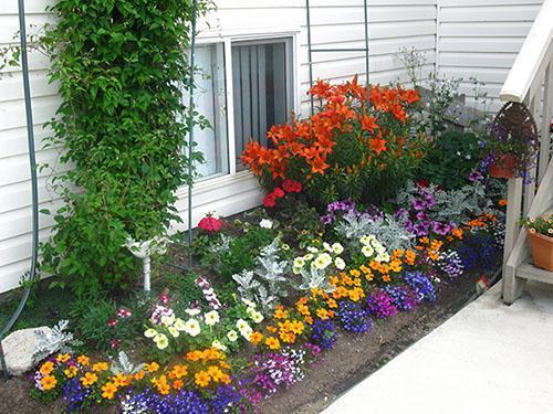Цветы возле дома.