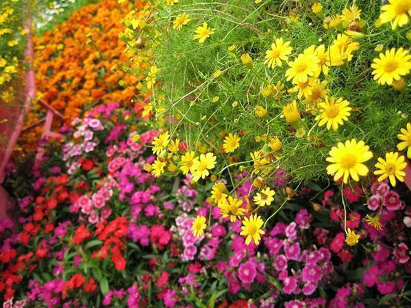 Клумбы из многолетних растений нуждаются в специальном уходе