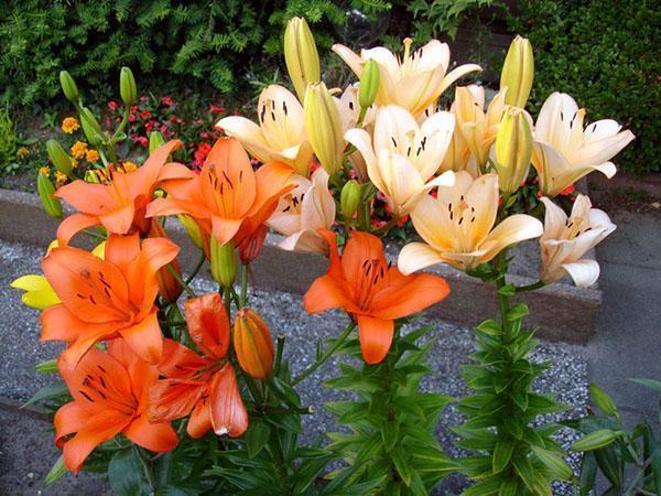 Посадка цветов 28