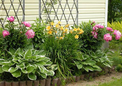 Какие цветы посадить 69