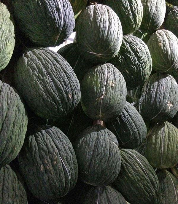 Плоды дынь Ассан-бей на хранении