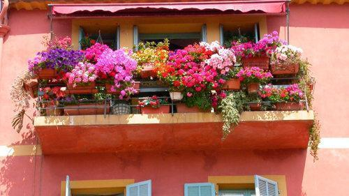 Роскошный балкон с петуниями